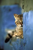 Alley cat hiding behind a wall