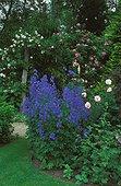 """Jardin de roses Belgique ; JPB 37 Rose """"Queen Elisabeth"""" """"Zepherine"""" et """"New Dawn"""""""