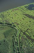 Marais arrière littoral recouvert par la Jussie ; Zone colonisée en jaune. Réserve Naturelle du Marais d'Orx France