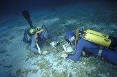 Etude sur la Grande Nacre de Méditerranée PN de Port-Cros