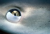 Carribean reef shark's nictitating membrane Bahamas