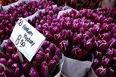 Bouquets de tulipes Arabian mystery Amsterdam Pays-Bas