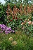 Ail Canna Macleaya Molinia Phlox Dahlia en fleur