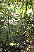 Forêt dense sempervirente Puerto Viejo Costa Rica