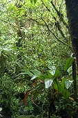 Forêt dense sempervirente Costa Rica