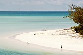 Aigrettes sacrées sur la plage Ouvéa Iles Loyauté