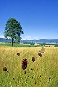 Meadow with Dusky Large Blue Val de Ruz France