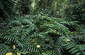 Sous bois d'une forêt tropicale secondaire Malaisie