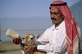 Nourrissage NWRC d'un jeune Oryx Arabie Saoudite ; Reportage Centre scientifique de Taïf Arabie Saoudite