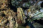 Pen shell and Posidonia Meditarranean