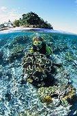 Plongeur et Récif corallien Ile de Siladen Manado Indonésie