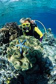 Diver and Coral reef Siladen Is  Manado Indonesia