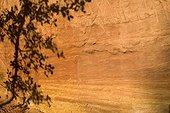 Ombre d'un chaîne vert sur une falaise d'ocre ; Commune de Roussillon, Parc Naturel Régional du Luberon