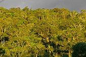 Dense forest sempervirente Andasibe Madagascar[AT]