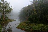 Dense forest sempervirente and river Andasibe Madagascar[AT]