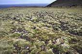 Ecosystème dominé par les mousses sur  l'île de Crozet TAAF