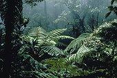 Végétation luxuriante de forêt tropicale d'altitude Java