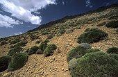 Montagnes de l'Atlas Haut Atlas  ; En redescendant du col de Tizi n'Oughri (3200m). Grande traversée du Mgoun au Toubkal.