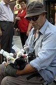 Homme nourrissant des chatons Espagne ; Ville de Barcelone