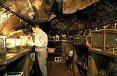 Salle des Euproctes du laboratoire souterrain de Moulis ; Dans le programme sur les Euproctes (amphibien endémique des Pyrénées), on étudie sa sociabilité et son rythme d'activité.<br/>Laboratoire de Moulis : unité mixte CNRS, a pour ojectifs la recherche et la formation sur le domaine souterrain.