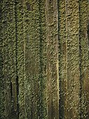 Lichen sur une façade nord en bois Lituanie