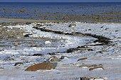 Côte sur la baie de Churchill Canada