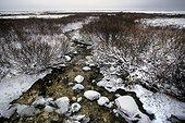 Cours d'eau dans la toundra Baie de Churchill Canada
