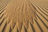 Run of sand in the dunes United Arab Emirates