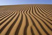 Dune in the sand desert United Arab Emirates