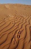 Traces of Arabian Oryxs in the desert United Arab Emirates