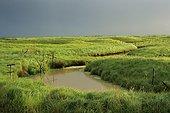 Prairie naturelle au mois de mars France ; prairie naturelle au mois de Mars Loire-atlantique Marais Breton. Bourneuf en Retz