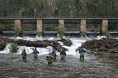 Electric fishing to Atlantic Salmon to make cross a stopping