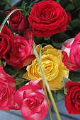 Detail of a 60 roses bunch of various colors