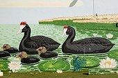Famille de Foulques à Crête sur une peinture murale ; La Albufera Valencia