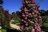 Roseraie départementale du Val de Marne à l'Hay les Roses