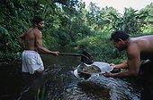 Chercheurs d'or remplissant une battée Guyane française ; Cette technique d'orpaillage est artisanale.<br>Elle consiste à nettoyer la terre jusqu'à ce que les particules d'or, plus lourdes, restent au fond de la battée.<br>Mais elle sert également pour prospecter l'état du sol et voir s'il contient de l'or avant de couper les arbres et d'installer un matériel plus lourd.<br>L'orpaillage pollue l'eau des rivières du fait des rejets de boue qui asphyxient plantes et poissons, mais aussi à cause du mercure rejeté dans l'eau qui empoisonne les poissons et les indiens qui les consomment