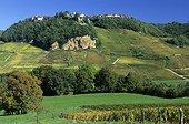 Vignobles de Château Chalon dans le Jura France