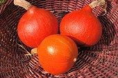 Potimarrons 'Golden Delicious' au Potager de Valmer