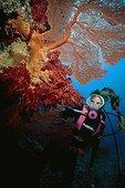Diver observing a Gorgon Australia