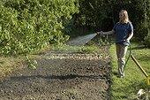 Arrosage de l'engrais vert après semis