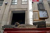 Rule of Buddha on sale on an avenue of Manhattan