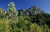 Paysage de fynbos à Table Mountain Cape Town RSA