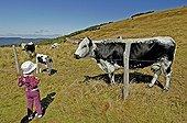 Fillette regardant les vaches vosgiennes sur les chaumes