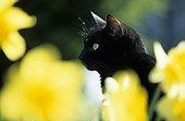 Chat domestique assis au milieu des fleurs