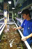 Technician and technical aquariums of coral breeding France ; Site: Aquarium Nausicaa (National Center of the Sea) in Boulogne sur Mer.<br>This Coral culture is used to supply the public aquariums and thus avoids the taking away in natural environment.