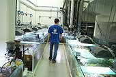 Technical aquariums of coral breeding of Nausicaa France