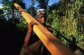 Hauling of a moabi in the forest of Eschiembot Cameroun