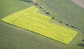 Mustard field in the Moselle France