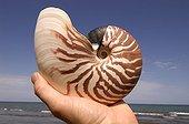 Coquille de Nautile dans une main Nouvelle-Calédonie