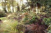 Hydrangea macrophylla Fern and Molinia Belgium